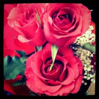 Roses are Fuchsia by Due-South