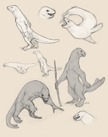 Seal Race Sketches by tashcrow