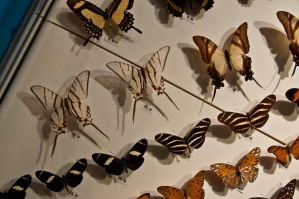 moths and butterflies stock140 by hatestock