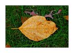 Wet leaf.L1030801, with story by harrietsfriend