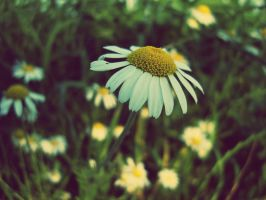 Marguerite by lilly1921