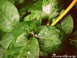 Rain by madaphotography
