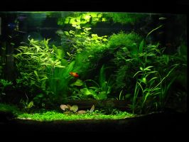 Sunburst's Aquarium Garden by Sunstars