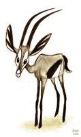 Gazelle Sketch by sketchinthoughts