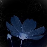 Ink blue:::: by aopan