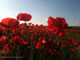Waving Poppies by Tinkers-Cove