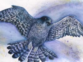 Watercolor Falcon by razzlepazzledoodot
