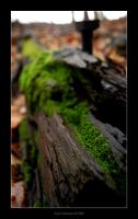 Nature 2 by onyx