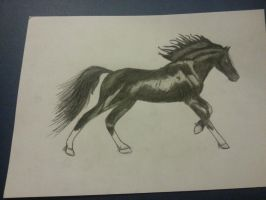 Black horse by Seluni