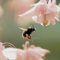 21.52 - Honey by MadSubstance