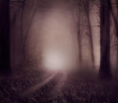 Foggy Wood backgrounds by moonchild-lj-stock