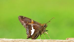 Butterfly On A Fence by fractalfiend