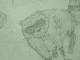 Raccoon Sketch by darklylightkayleigh