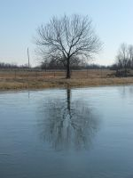 Reflection in winter by way2col4u