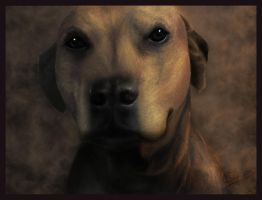 Jazz the Rhodesian Ridgeback by RebeccaStapp