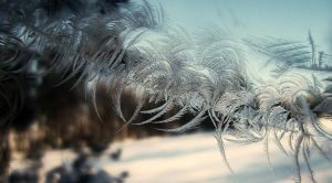 Ice crystals II by SilkPiggy