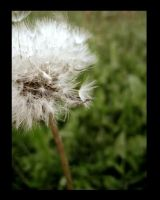 blowball by blindXscream