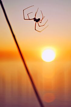 Spider at Sunset by SublimeBudd