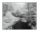Spring IR stream.P1010888, with story by harrietsfriend