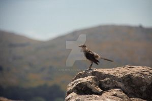 Tandil-446 by anampi
