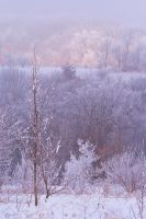 Frosty Colors by leavenotrase