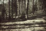 Spring Woods by mabuli