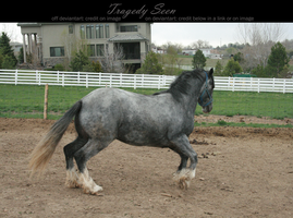 blue roan stock 90 by tragedyseen