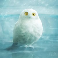 snowball by photoplace