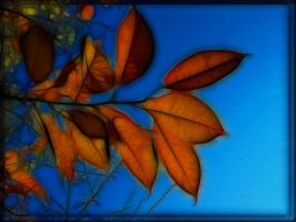 autumn colours 5 by Placi1