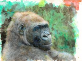 Gorilla by ApeSpacer