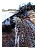 Driftwood - Red Pine Lake by fragilemuse-org