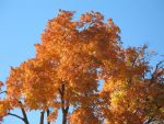 Shades of Autumn 2 by Jyl22075