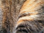 Fur Textures 01 by DKD-Stock