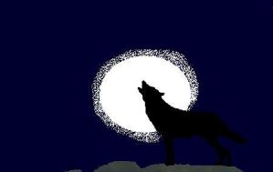 Lone Wolf by DragonologyStudent