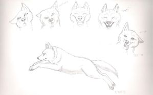 wolf sketches? by morganwtb11