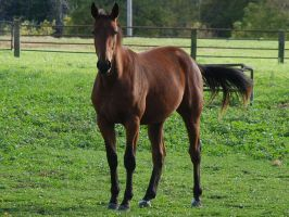 Yearling5 by EquestrianPassion