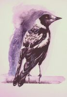 Magpie Watercolour Painting by nataliebeth