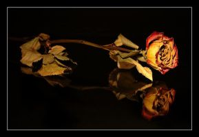 rose in darkness by Platonov
