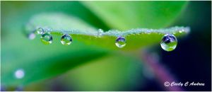 Water drops by CecilyAndreuArtwork