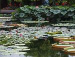 Water lily pond by Pepperspony
