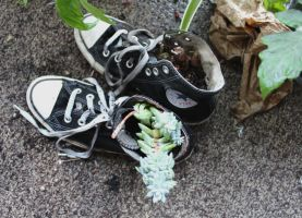 Plants vs. Chucks by lupagreenwolf
