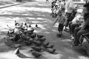 Pigeon Social In the Park 10 by Miss-Tbones