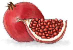 Pomegranate by torstan