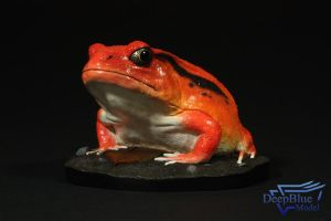 Tomato Frog by DeepBlueModel