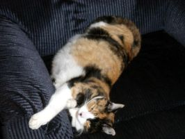 Calico Cunt Cleo by sickcatstock