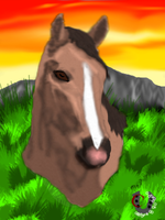 ~Butterfly The Wild Horse~ by horselife1236