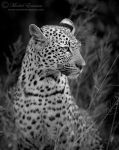 Regally Poised by MorkelErasmus