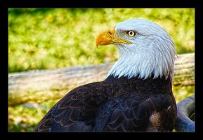 Relaxing Eagle by joelht74