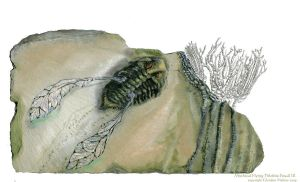Flying Trilobite Fossil III by GlendonMellow