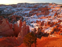 bryce canyon -winter by NISSHIE